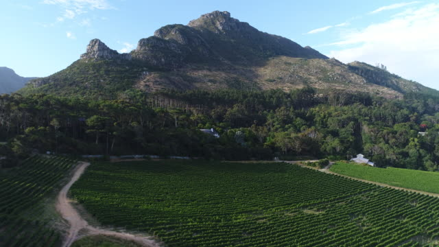 Mountain on Wine Farm at Sunset in Cape Town, South Africa video