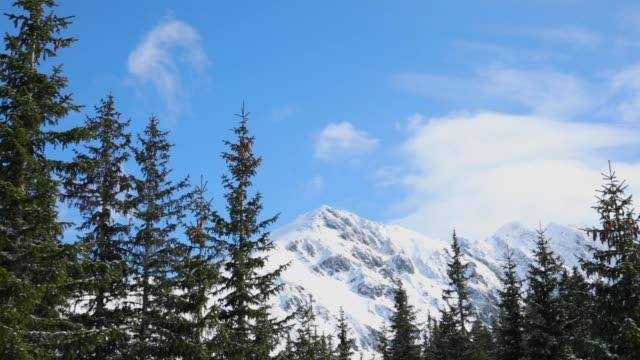 dağ doruklarının polonya 'da zakopane trek sırasında yeni kar ile tamamen karlı - zakopane stok videoları ve detay görüntü çekimi