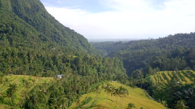 Mountain Rice Terrace North Bali Drone View video