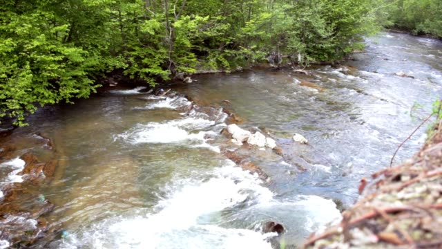 Mountain river flowing in green forest. Beautiful natural landscape video