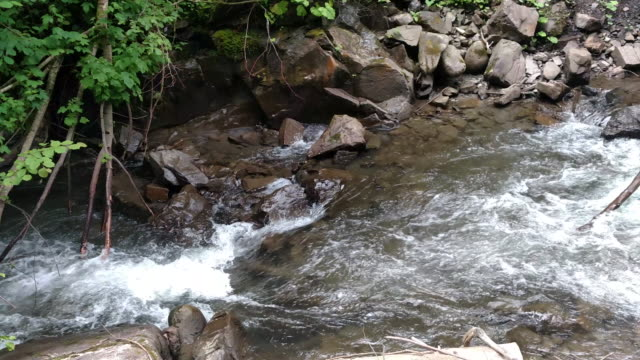 mountain river flowing near the green forest travel in carpathians of ukraine strong stream of a mountain river - near video stock e b–roll