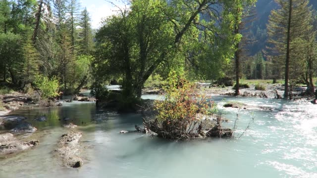 森の中を流れる山の川。アルタイ山脈の風景.kucherla 川 - シベリア点の映像素材/bロール