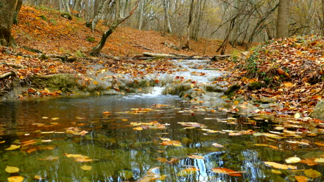 mountain river in autumn forest video