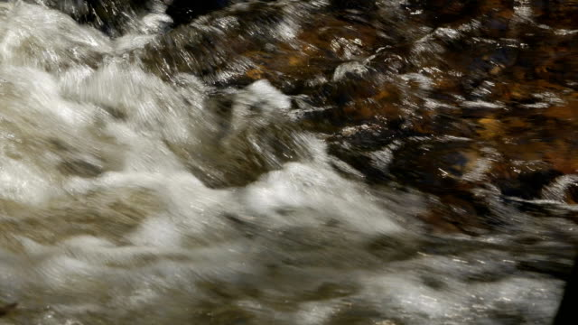 Bидео Mountain river in the forest close up