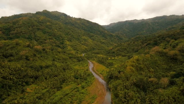 Mountain River in the rainforest.Camiguin island Philippines video