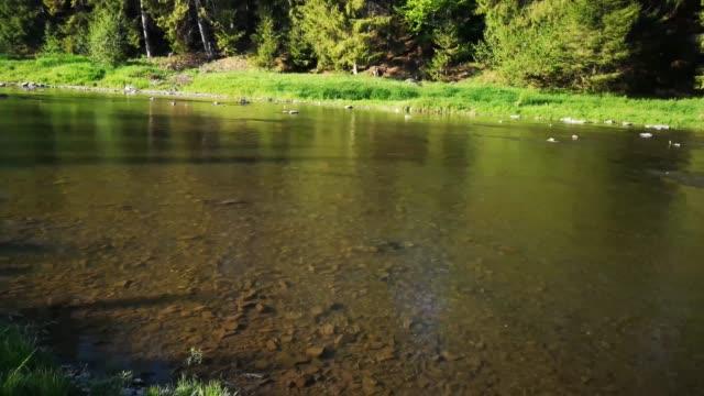 fjäll floden - karpaterna tåg bildbanksvideor och videomaterial från bakom kulisserna