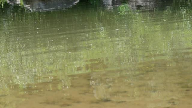 mountain river - platypus bildbanksvideor och videomaterial från bakom kulisserna