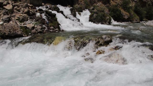 stockvideo's en b-roll-footage met berg rivier - plantdeel