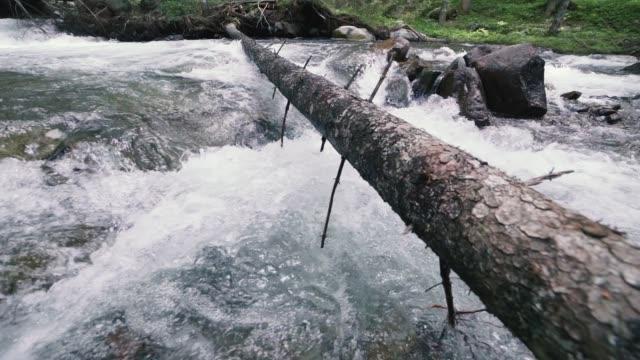 berg mit felsen im holz, zeitlupenaufnahmen, dolomiten, südtirol, italien - süßwasser stock-videos und b-roll-filmmaterial