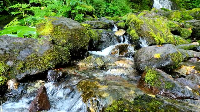 Mountain Stream Flow Through Moss Covered Rocks