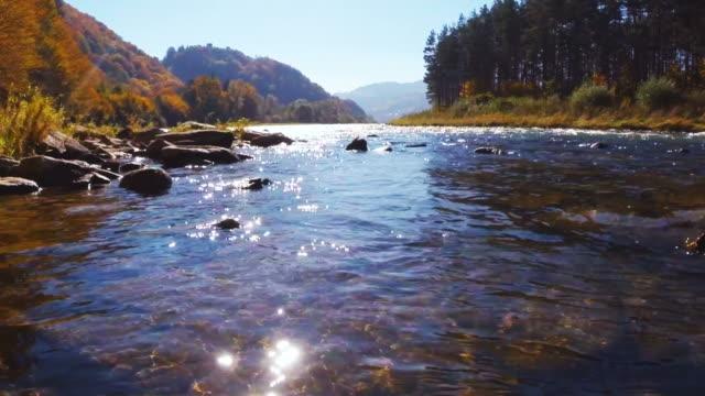 güneşli bir sonbahar gün dağ dere. rytro, polonya. - akan su stok videoları ve detay görüntü çekimi