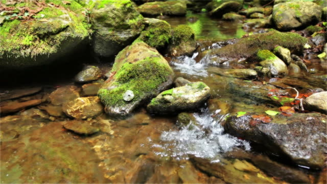 Mountain Stream  running water stock videos & royalty-free footage