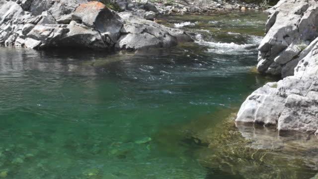 ruscello di montagna - trout video stock e b–roll