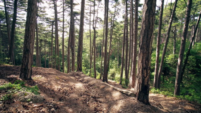 Mountain Summer Forest Background Motion Cam video