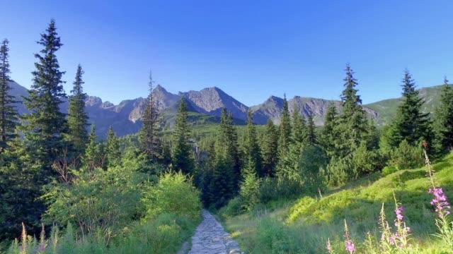 yaz aylarında dağ barınaklarına giden dağ yolu, tatras - polonya stok videoları ve detay görüntü çekimi