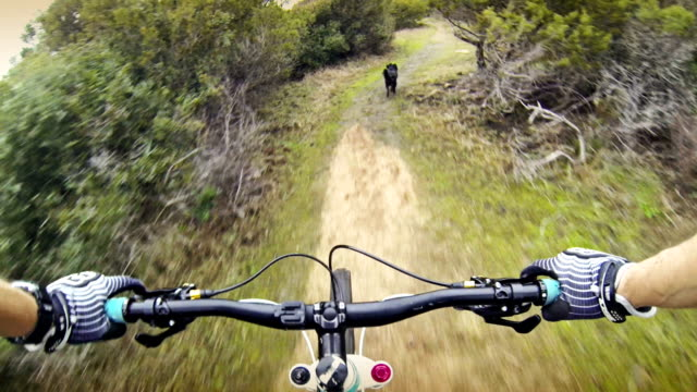 stockvideo's en b-roll-footage met mountainbike video in mediterranean vegetation with a dog - gopro