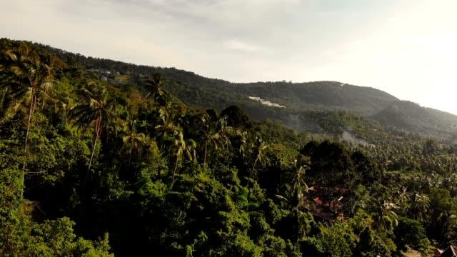 明確な空の下で椰子の木に覆われた山々。サムイ島の高い緑の山々 の風景は、タイのエキゾチックな植物で覆われています。空中ドローン ビュー - サムイ島点の映像素材/bロール