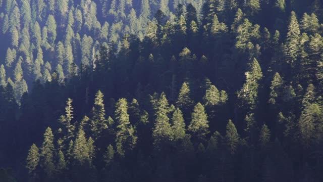mountains of western caucasus - хвойное дерево стоковые видео и кадры b-roll