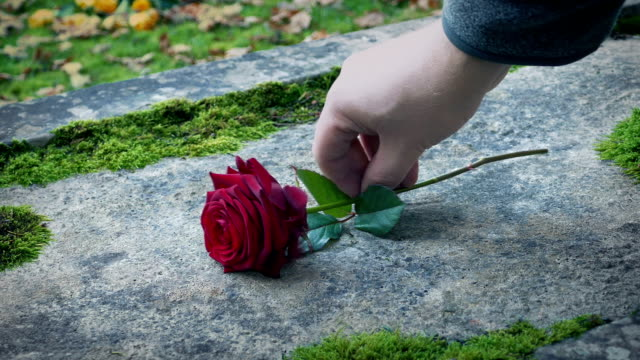 mourner sätter en ros på grav - minnesmärke bildbanksvideor och videomaterial från bakom kulisserna