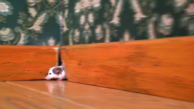 mysz wypływający z jej otwór - dziura filmów i materiałów b-roll