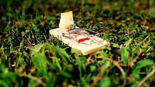 HD: Mousetrap On A Meadow HD 1080p: Mousetrap On A Meadow With Shallow Depth of Field. Nice Warm Colours. incentive stock videos & royalty-free footage