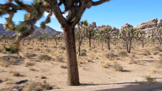 アメリカのモハーベ砂漠で、ジョシュア ツリー国立公園に沿っての動き - ジョシュアツリー国立公園点の映像素材/bロール