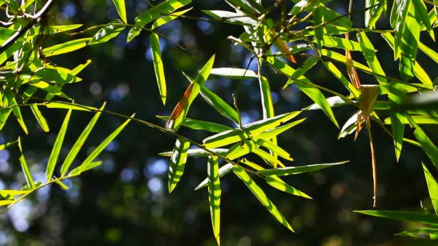 動きの竹の木 - 笹点の映像素材/bロール