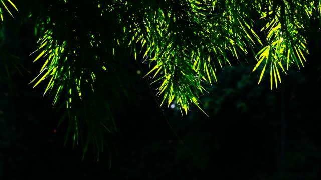 動きの竹 leafs - 笹点の映像素材/bロール