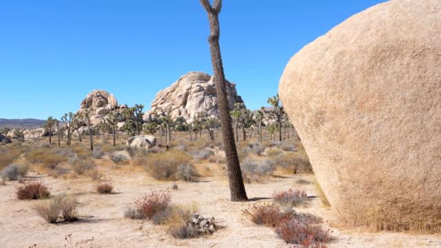 ジョシュア ツリー サボテン、巨大な岩と砂のモハーベ砂漠を移動 - ジョシュアツリー国立公園点の映像素材/bロール