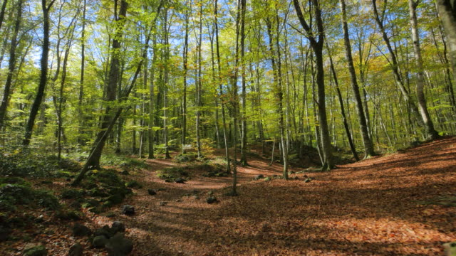 Moving Along the Beech Fields in Early Autumn – film