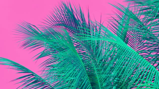 Moving Coconut palm tree leaf by Wind, colorful