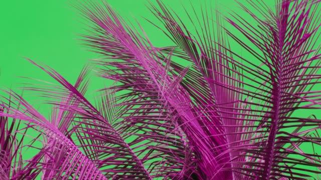vidéos et rushes de feuille de cocotier en mouvement par le vent, colorée - arbre tropical