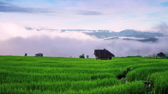 Moving fog and clouds over mountain with beautiful green rice paddy in field at Pa Pong Piang, Chiang Mai northern of Thailand