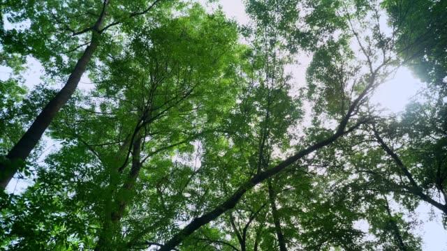 茎高森の中で緑の森の映像を移動、長い角は、日当たりの良い夏の間太陽光線や自然をキラリと光る - 木漏れ日点の映像素材/bロール