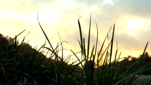 Moving from grass to sky. sunset clouds video