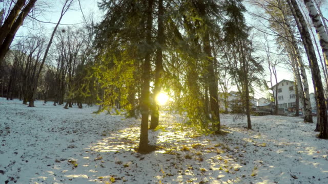Moving POV in a fabulous winter forest at city park video