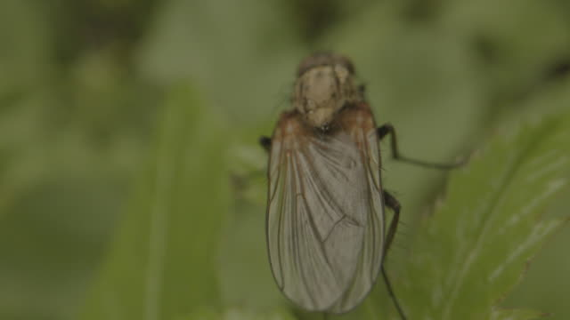moving macro shot of a fly sitting on a leaf - центральная европа стоковые видео и кадры b-roll