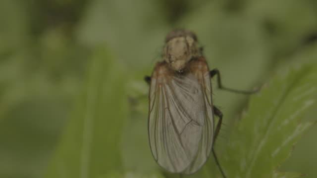 moving macro shot of a fly sitting on a leaf - styria filmów i materiałów b-roll