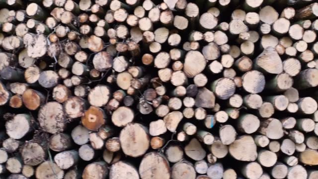 vídeos y material grabado en eventos de stock de movimiento en movimiento de una pila de troncos de árboles cortados, deforestación y mantenimiento del bosque, fondo de madera amaderada - material de construcción