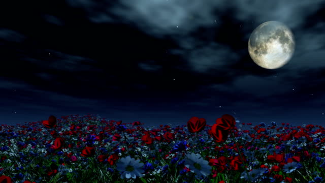 Moving past a field of flowers at night video