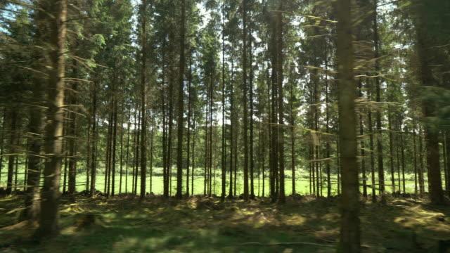 flytta förbi en pinjeskog i sverige - pine forest sweden bildbanksvideor och videomaterial från bakom kulisserna