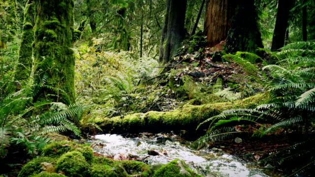 in den wäldern bewegen - staatspark stock-videos und b-roll-filmmaterial
