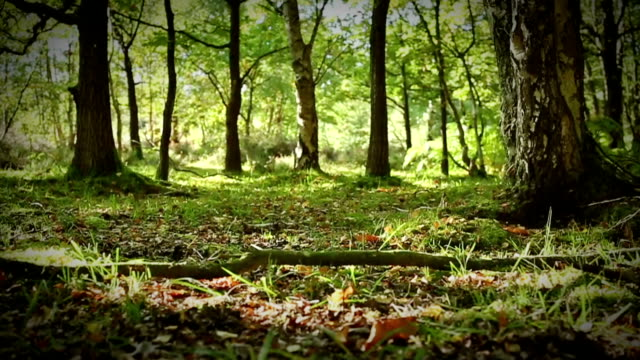 moving through a lush green forest floor - england stock videos & royalty-free footage