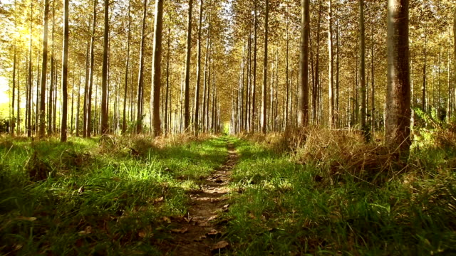 vídeos de stock, filmes e b-roll de movimento por um verde exuberante do chão da floresta - wood