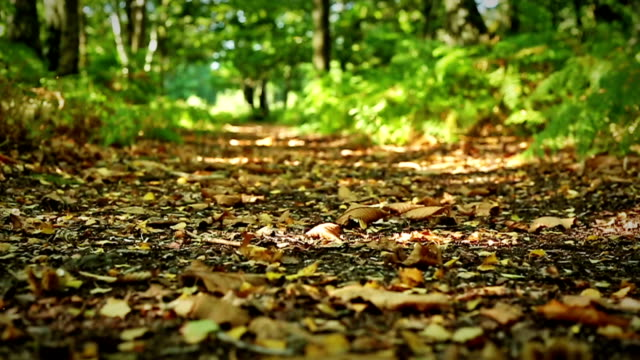 Doorlopen van een weelderig groen bos-vloer video
