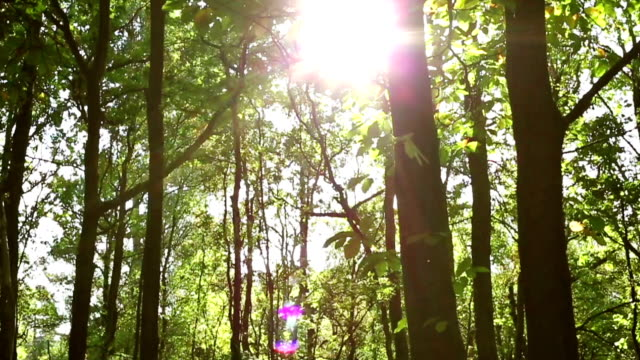 Moving through a lush green forest video