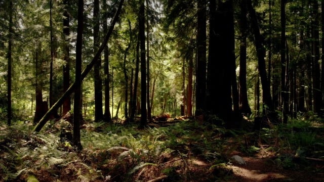 Moving Through Beautiful Summer Forest video