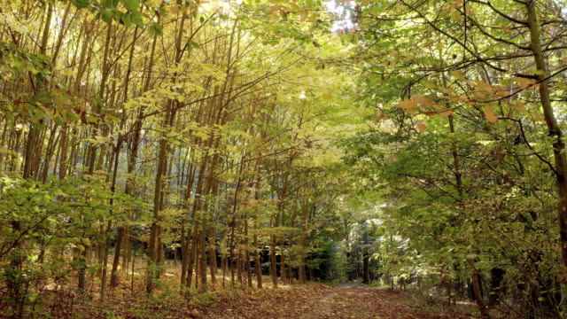 Moving Through Deciduous Autumn Forest Point of view shot made in 4K/Ultra High Definition. True 4:2:2 at 10bit country road stock videos & royalty-free footage
