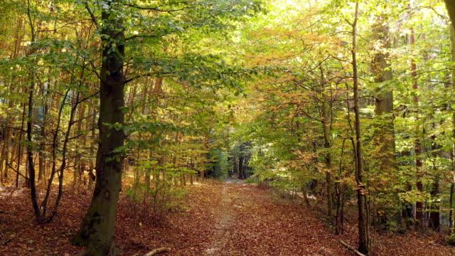 Umzug durch Laubwald im Herbst – Video