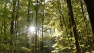 istock Moving Through Deciduous Forest in Autumn 1069256816